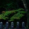 東行庵の紅葉が始まりました