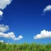 隣の芝生は青く見えるので心を無にします