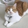 8/8 世界猫の日(International cat day)。