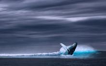 クジラはなぜ、ビニール袋を80枚も食べたのか。英語多読ニュース