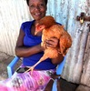 人鶏補完計画-ついにヒヨコと母鶏をゲットーその2
