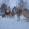 冬のイルクーツク、バイカルツアー(2018.2) その8 犬編