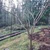 果樹の剪定