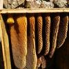 ミツバチの越冬失敗