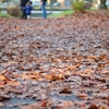 秋深まるモンツァ