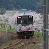 今週も続きます桜「西岸駅」