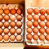 卵とか旬の素材で作ったパスタとか
