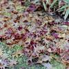 Rolleiflex SL35で秋を楽しむ