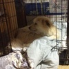 災害に備えて、ペット犬の避難対策