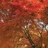 目に映る自然の色が胸に沁みるほど鮮やかに映る訳
