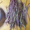 サツマ芋鑑賞用から植え込みへ~収穫~食卓へ。ーーその3