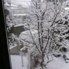 雪の日をユーチューブで。「マララ・ユサフザイ」も。