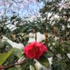 溶けかけ雪の清水寺とその周辺てくてく(後編)