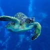 セブ島と周辺のダイビングスポット-ペスカドール島、スミロン島-【フィリピン留学】