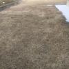 【芝生】除草剤選び 2017/3/25