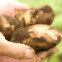 プランター栽培で始める!簡単プチ家庭菜園!