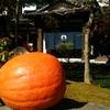 軽井沢の隠れ家「くつかけステイ」は食事はもちろん格安の宿泊も可能
