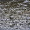 日曜日:風雨強まる
