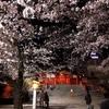 「美しい」という感覚について【桜】