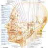 顔面神経の覚え方
