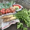 有機野菜の収穫祭