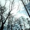 森の中で光を見る