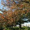 綾瀬川堤の秋・色な場所の思い出・橙6…