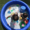 【お庭プール】5時間水出しっ放しにした話&ステロイドの豆知識*