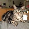 【保護活動】【多頭飼い】私に幸福せを運んでくれた2人 ~我が家の猫のお話をします(その4-2)福~