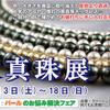 本日から「大真珠展」開催いたします。
