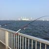 昼間に釣れて来た17センチのアジ^ ^(第13回ふれーゆ裏釣行20200808)