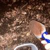 ウナギ、、いやナマズを食べてみた🤣相浦川