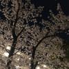 夜桜キレイ