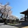 多摩川桜百景 -99. 普門寺-