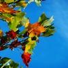 今日は秋分の日ですね 調子はいかがですか?