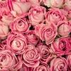 バラの調香体験講座開催のお知らせ