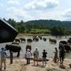 世界一周ピースボート旅行記 16日目~スリランカ(コロンボ)~③「ゾウの水浴び」