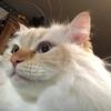フォーチュンクッキー:猫的フォーチュン