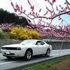 【修正版】期間限定! 山梨桃の花ドライブ。ホントは教えたくないマイナールート