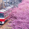三浦半島にも春がキター!!
