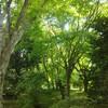 八月は緑の森の中