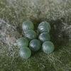 ゴマダラの卵塊