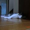 おネコさま蒸し暑さ。