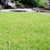 芝生にキクラゲのようなブヨブヨしたモノが大量発生!?駆除と対策をご紹介!