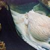子供は泣き外国人は笑い出す『池袋サンシャイン水族館』