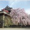 上田城千本桜祭り(2018) 上田の桜はもう満開ですよ