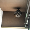 豊橋市でウッドデッキの下に出来た蜂の巣を駆除してきました!