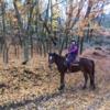 第143回(2016.12.2.)「馬で紅葉の山の登りました!」