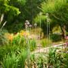 梅雨入り前の植物園 Ⅳ
