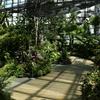 植物園に行ってきた。